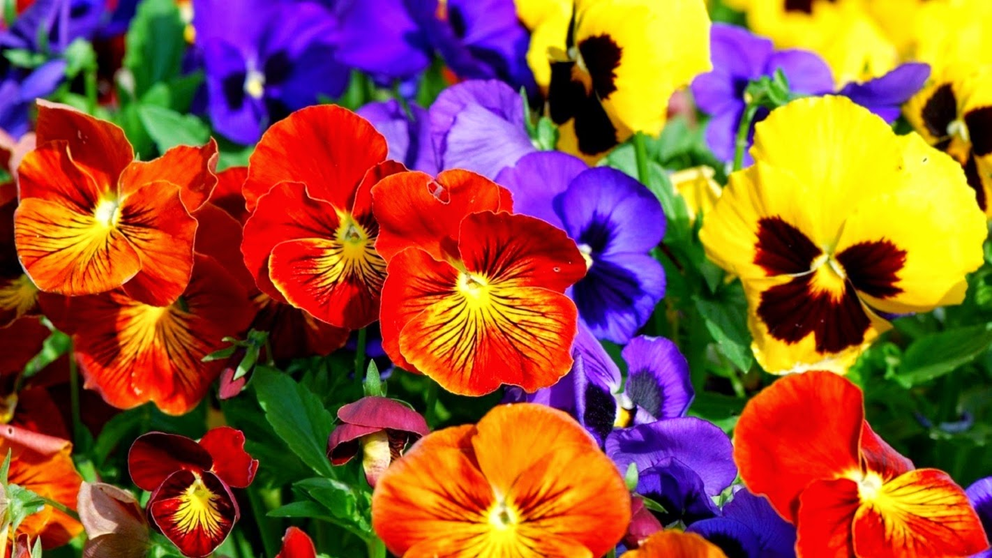 Colorful Flowers Background Wallpapers