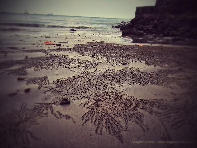 Arte na praia feita pelos pequenos crustáceos