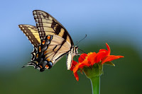 Butterfly - Photo by Joshua J. Cotten on Unsplash