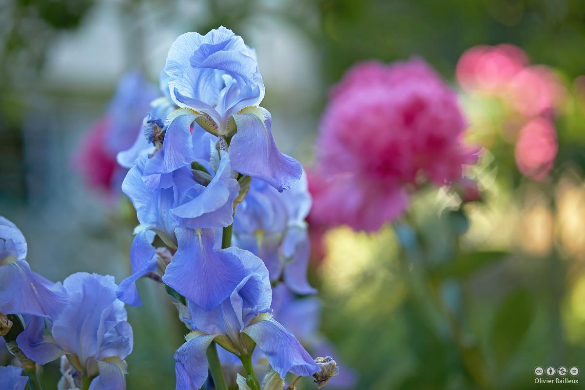 un bouquet au château de rosières
