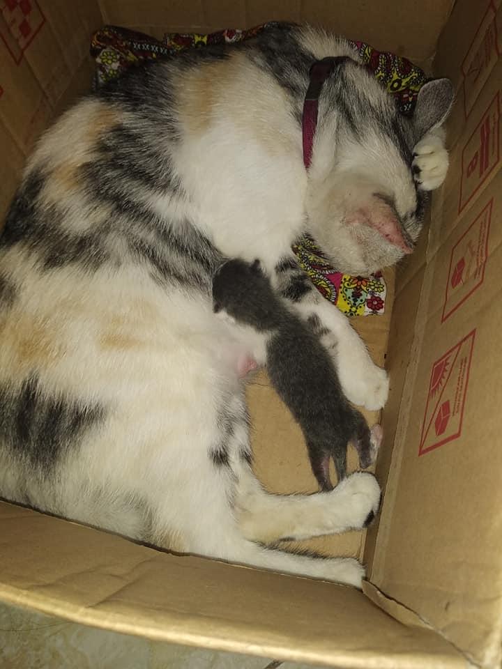 Kucing melahirkan satu anak