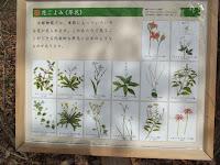 Understory wood plants - Kyoto Gyoen National Garden, Japan