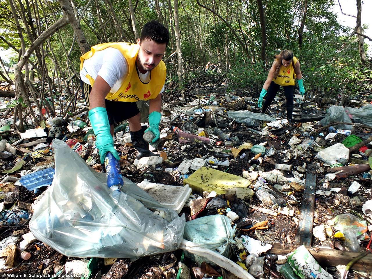 Voluntários coletam plástico durante ação voluntária em manguezal de Santos