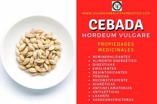 La Cebada tiene Propiedades Medicinales Remineralizantes, Digestivas, Emolientes
