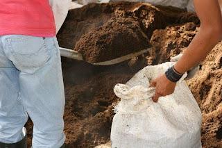 ternak cacing tanah