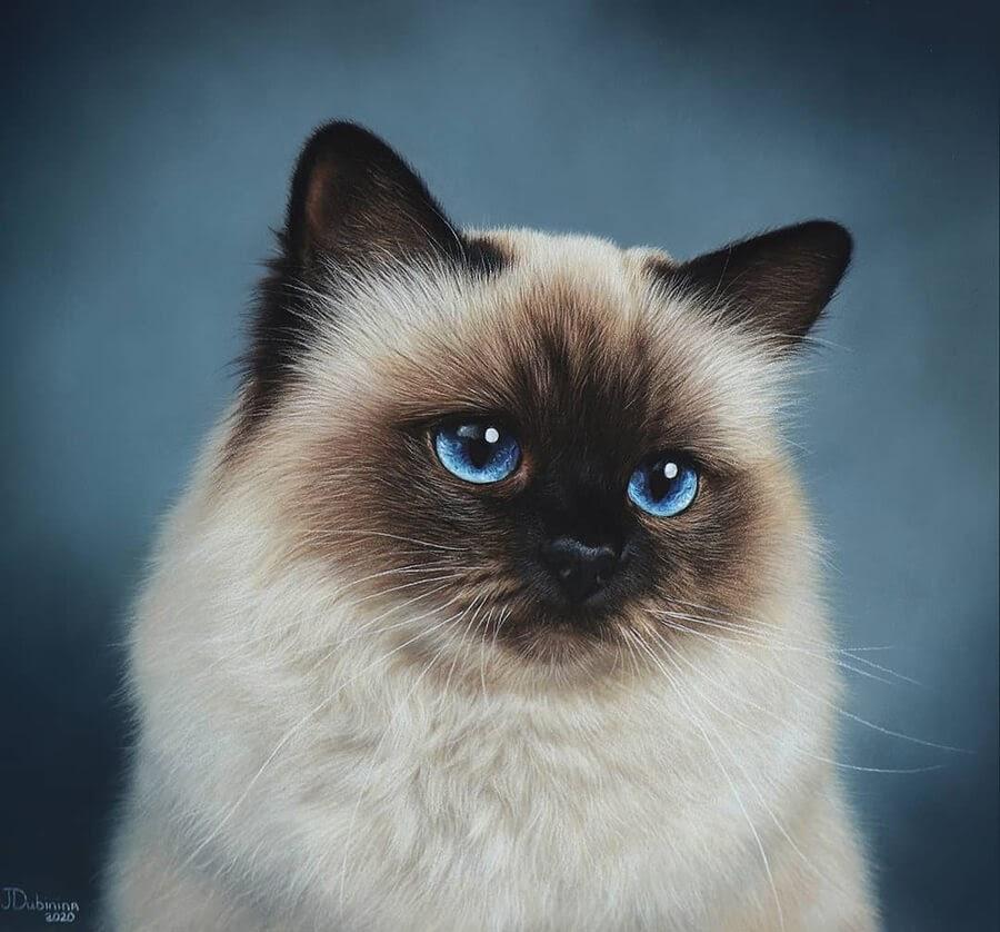 09-Blue-eyed-Siamese-kitten-Julia-Dubinina-www-designstack-co