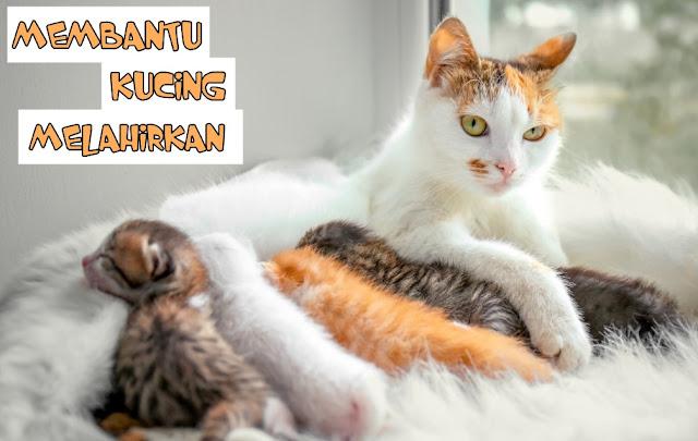 Kucing Melahirkan di rumah Menurut Islam