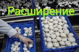 Расширение грибного хозяйства
