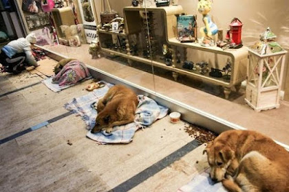 Ratusan Anjing Penuhi Isi Mall di Turki - Bukti Nyata Bahwa Islam Agama Yang Damai