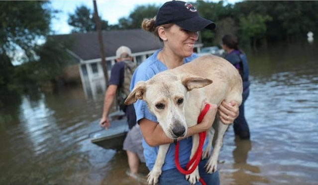 how to protect pets and animals from flooding