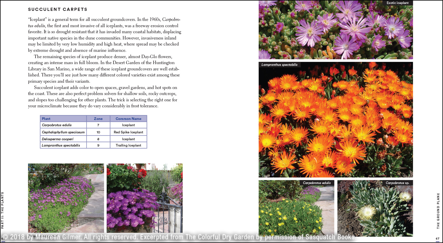 Over 100 Flowers and Vibrant Plants for Drought Desert /& Dry Times The Colorful Dry Garden