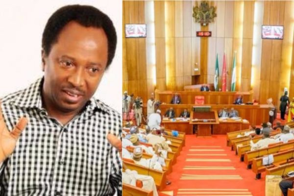 Senators-receive-N135-Million-Running-Cost-every-month-Shehu-Sani