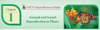 CLASS 12 BIOLOGY BOTANY - CHAPTER 1 ASEXUAL AND SEXUAL REPRODUCTION IN PLANTS - 1 MARK QUESTIONS - ONLINE TEST