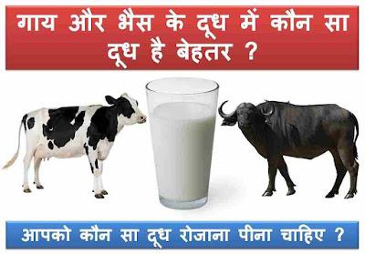 cow-buffalo-milk-better-hindi