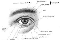 15  Cara Merawat Kesehatan Mata Anjuran