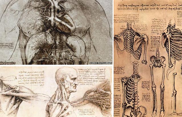 Desenhos anatômicos de Leonardo