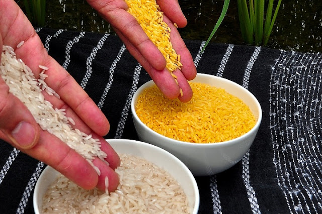 Initial peer-reviewed publications of Golden Rice biosafety data completed