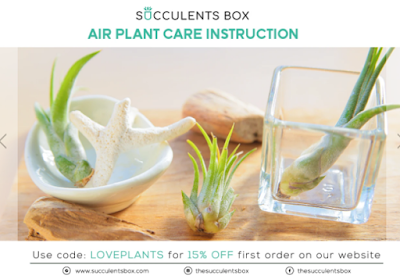 Air Plant Care Instruction Book