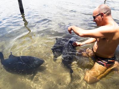 Alimentando os peixes na lagoa