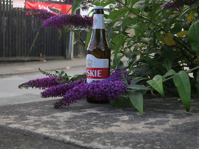 Tyskie beer bottle abandoned between buddleia flowers on a stone wall.