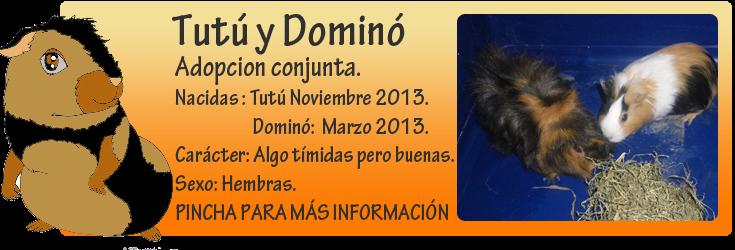 http://almaexoticos.blogspot.com.es/2014/09/tutu-y-domino-cobayitas-en-adopcion.html