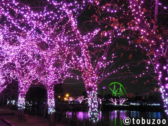 Tobu Zoo Winter Illumination