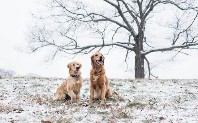 Twee honden buiten in de kou tijdens de winter