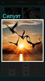 силуэты птиц при заходящем солнце, которые в полете над морем