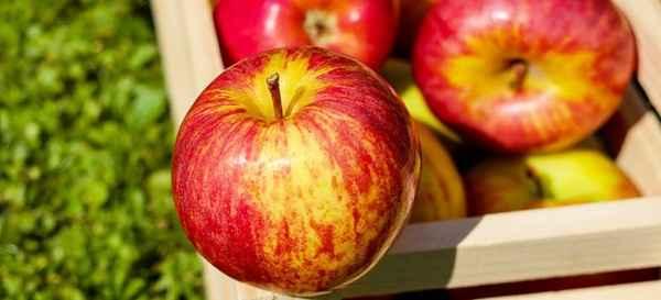 Makanan Untuk Penderita Asam Urat Kolesterol