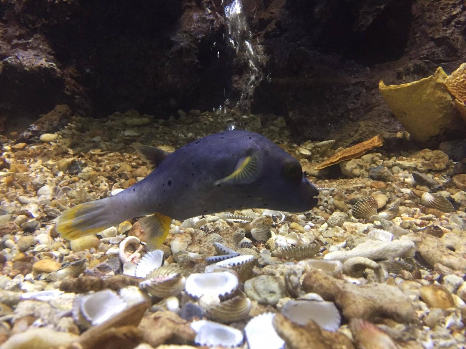Ban Phe Swethaiparadise: Swethaiparadise - Rayong Aquarium