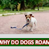 Why Do Dogs Roam                     KIDS STORIES.ONLINE