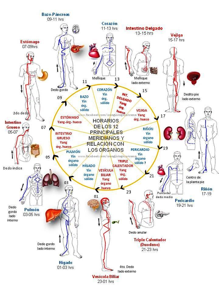 Auriculoterapia para bajar de peso funcionario