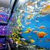 Kemenko Maritim dukung Nusatic kembangkan potensi ikan hias