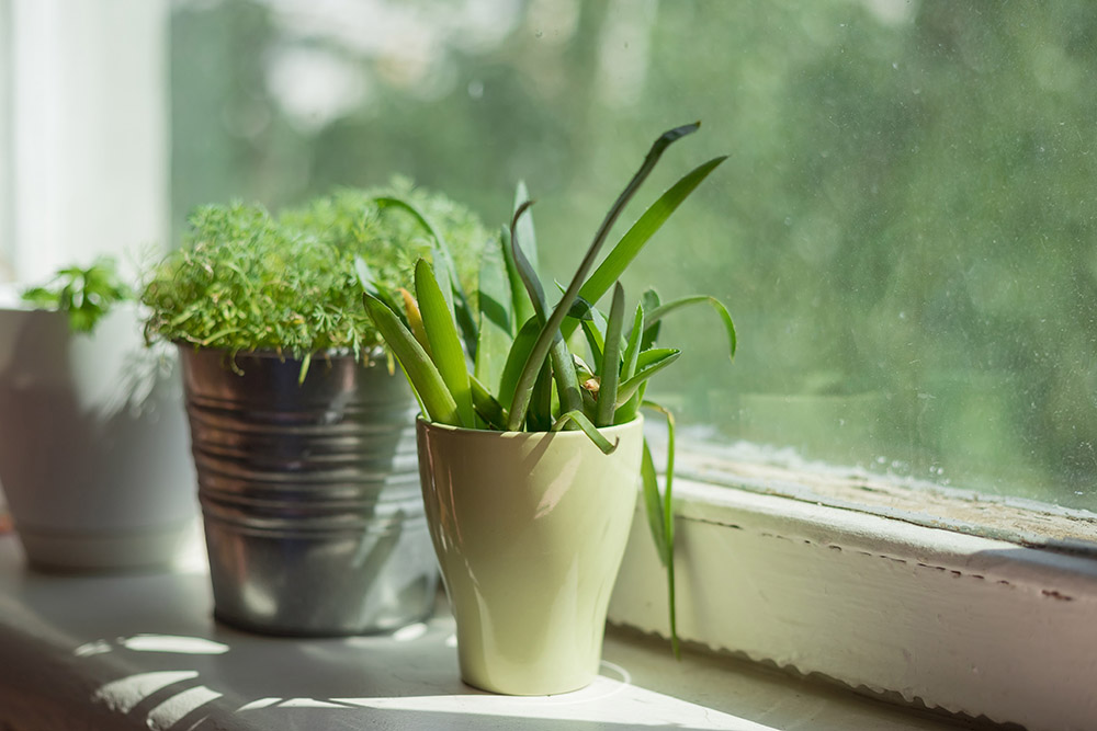 Organic Garden: A Small Step to Bigger Eco-Friendly Goals, herb indoor window