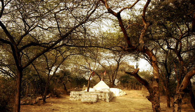 Sanjay Van trees, Delhi