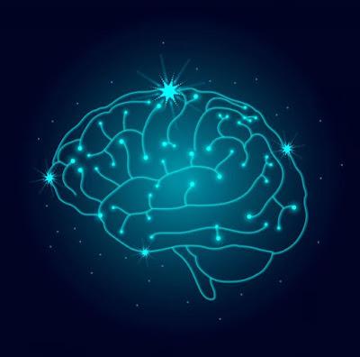 Human Brain Nervous System