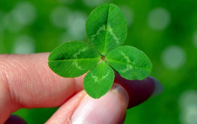 A 4 leaf clover