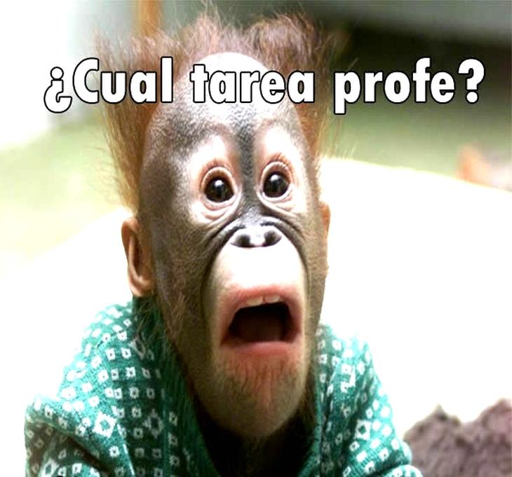 Imagenes Graciosas Chistosas Memes para reir profe tarea escuela colegio