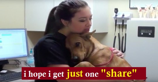 Dog Just 5 Minutes Away From Euthanasia Saved And Now Gives The Best Hugs