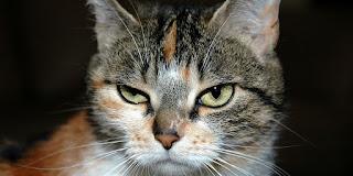 Kucing marah malah lucu