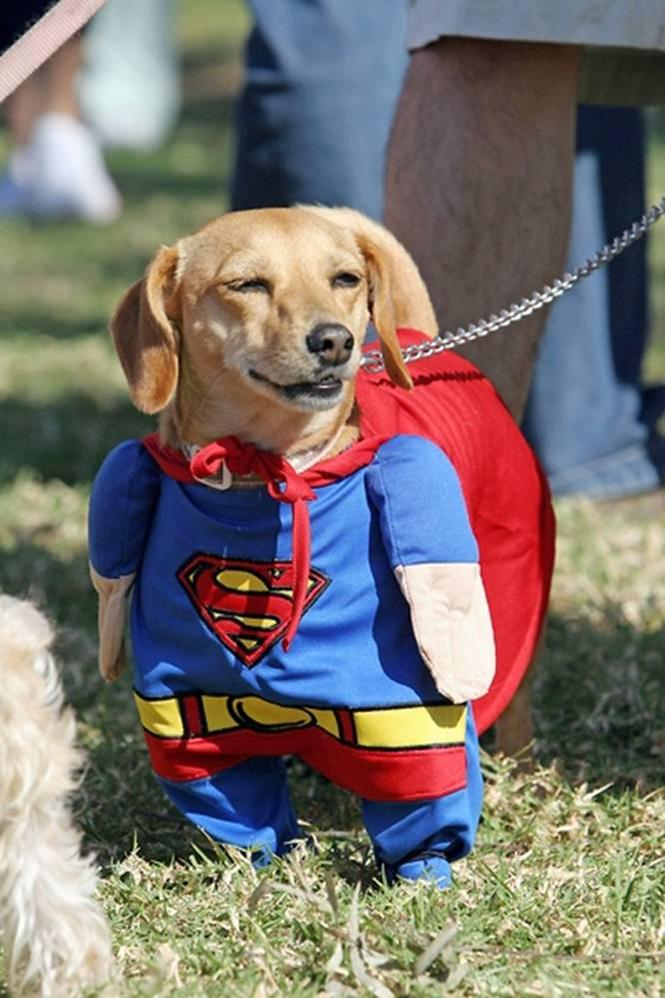 Funny Pet Costumes | Amazing Creatures