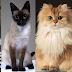 Οι πιο ακριβες γατες του κοσμου!