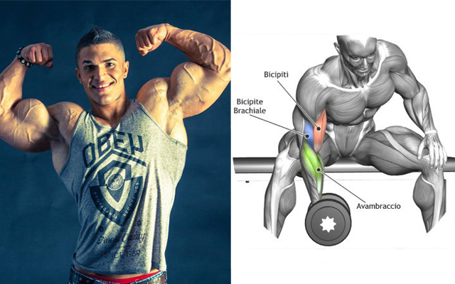 How To Increase Your Biceps Size