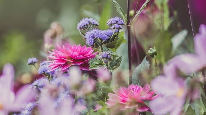 Plano de Fundo Lindas Flores de Jardim