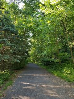 trail runnning path