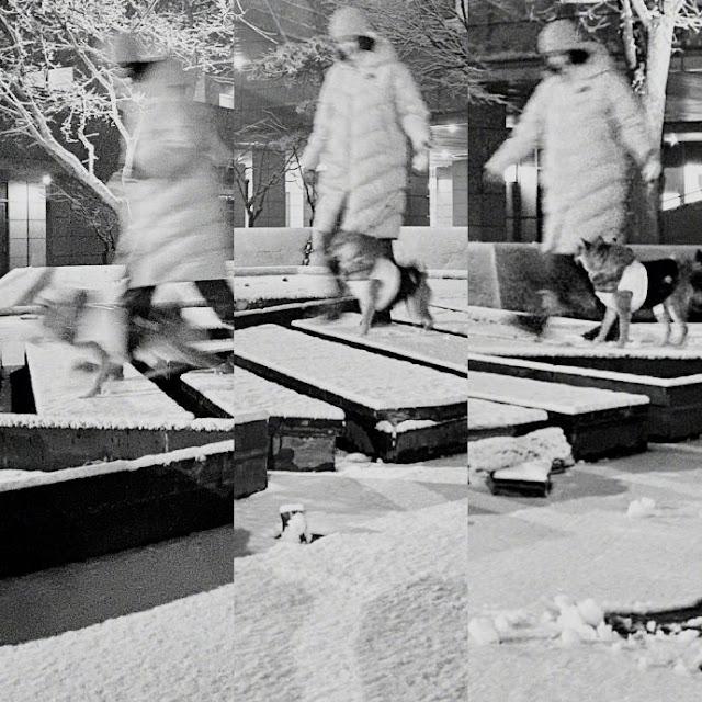 first snow wang luodan