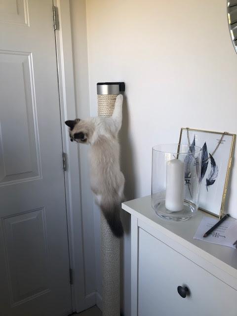 Catapilla Luxury Modern Cat Furniture