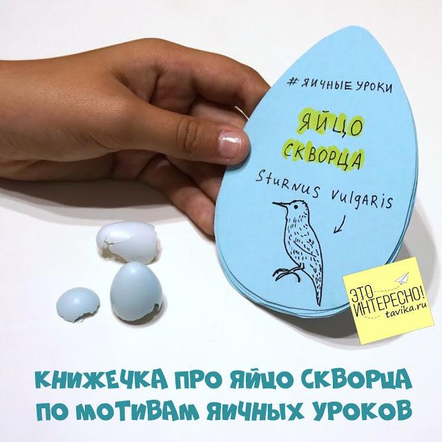урок биологии для детей про яйца