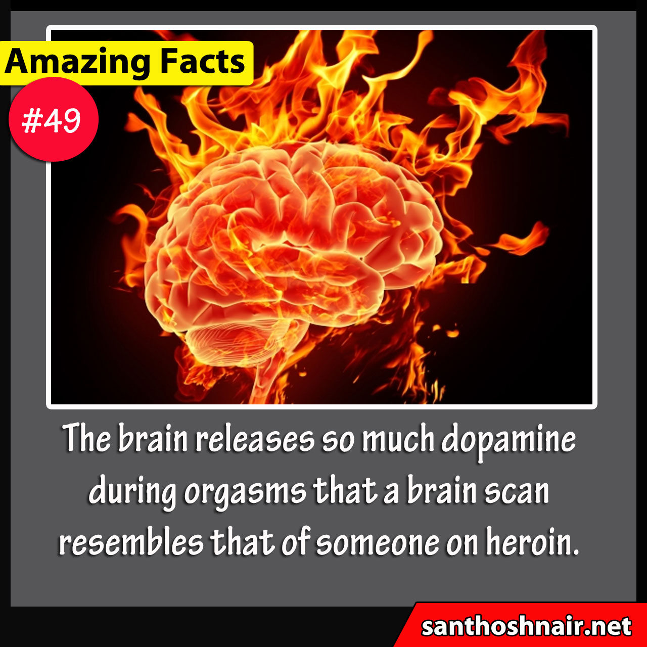 Amazing Facts #49 - Brain releases Dopamine
