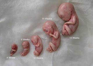 مراحل نمو الجنين حتى الشهر 3